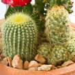 Collection of cactus — Stock Photo
