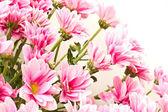 花束 — 图库照片
