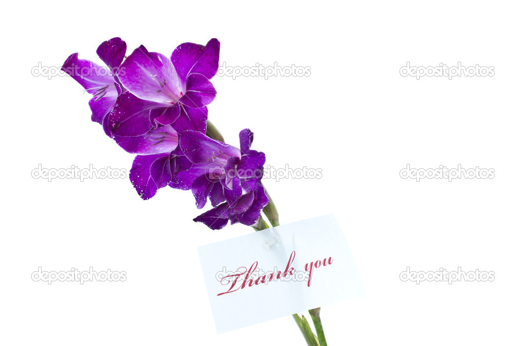 Say thank you on a background of beautiful flowers — Stock Photo #6293969