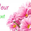 Stock Photo: Bouquet of pink flowers