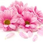 Pink flower — Stock Photo #6354967