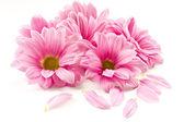 ροζ λουλούδι — Φωτογραφία Αρχείου