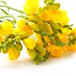 Bouquet of yellow flowers — Stock Photo #6420993