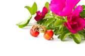 Fruits and flowers hips — Stock Photo