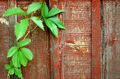 Sfondo in legno vecchio con foglia verde — Foto Stock
