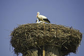 Storks at roof of church-detail — Stock Photo