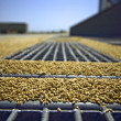 Wheat grains on the silo grid - Stock Photo