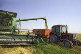 Pšeničná zrna — Stock fotografie