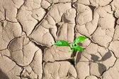 Green sprout on barren soil concept — Stock Photo