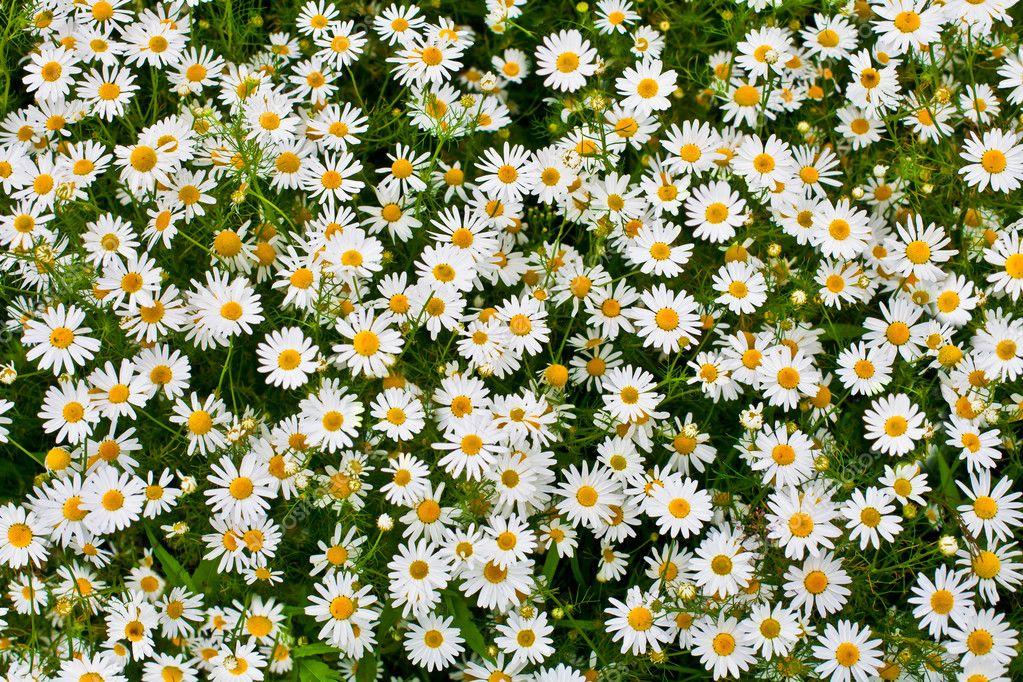 Поле цветов сверху