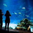 Real underwater background with fishes shoal — Stock Photo