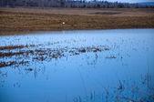 яркое голубое небо, отражение в воде, весенний пейзаж — Стоковое фото
