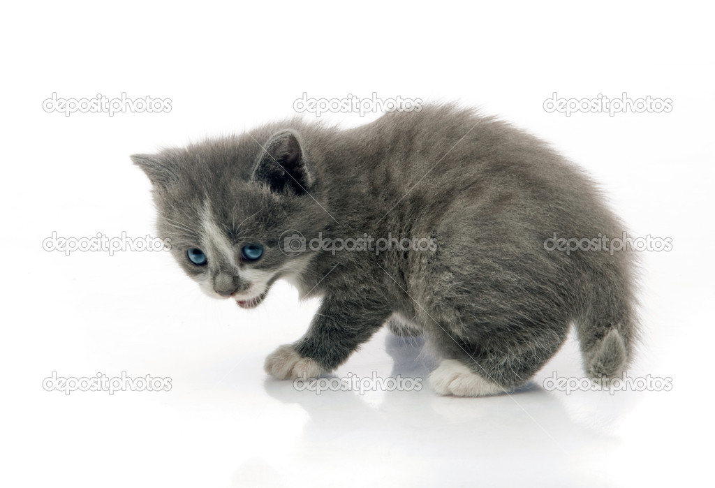 Little fluffy kitten makes the first steps — Stock Photo #5834772