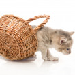 Small cute kitten sitting in a basket, close-up — Stock Photo