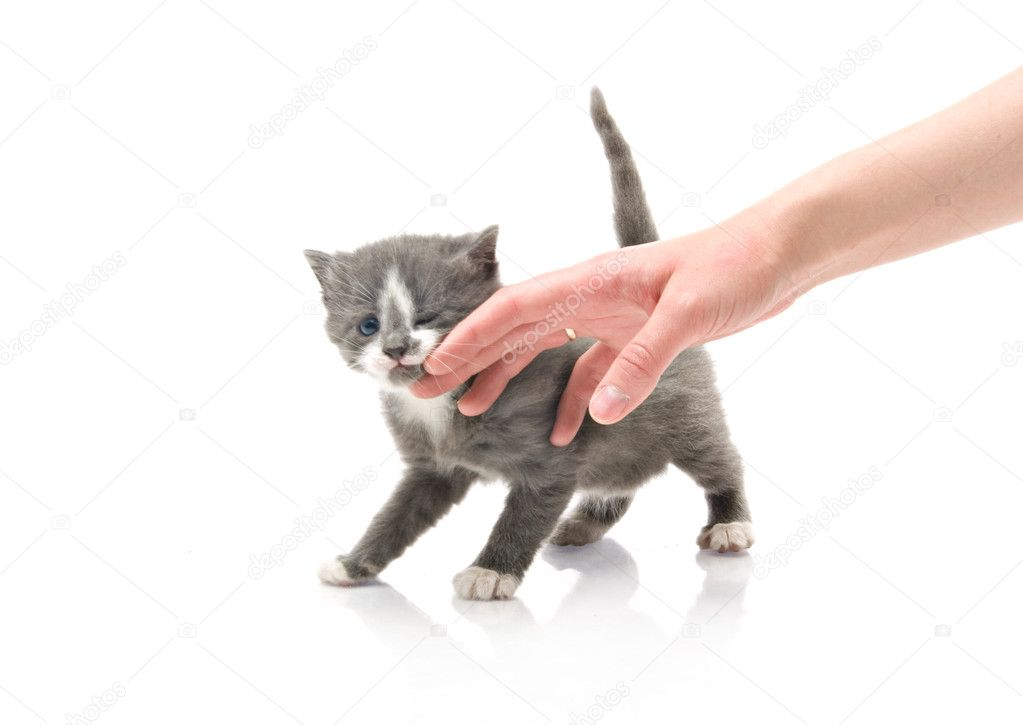 Hand girl stroking a fluffy little kitten — Stock Photo #5948853