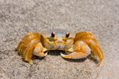 Ghost Crab On The Sand — Stock Photo