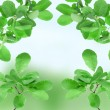 Beautiful spring green leaves — Stock Photo
