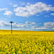 Rapeseed field — Stock Photo #5798011