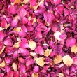 Dried petals — Stock Photo #5392588