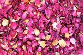 乾燥した花びら — ストック写真