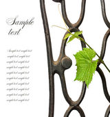 Wrought-iron lattice with a vine — Stock Photo