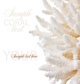 Coral — Stock Photo