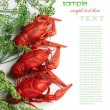 Boiled crayfish with dill - Stock Photo