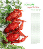 Boiled crayfish with dill — Stock Photo