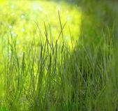 La hierba en la luz del sol — Foto de Stock