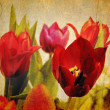 Vintage tulips — Stock Photo #5554427