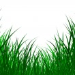 Grass illustration — Stock Photo