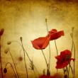 Stock Photo: Vintage poppies background