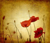Vintage poppies background — Stock Photo