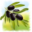 A branch of black olives. — Stock Vector
