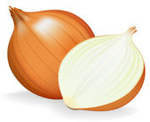 Golden onion whole and half. Vector illustration. — Stock Vector