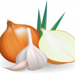 Onion and garlic. — Stock Vector