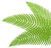 Bir eğrelti yeşil yaprakları. vektör çizim. — Stok Vektör