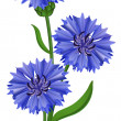 Flowers blue cornflower. Vector illustration. — Stock Vector