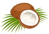 Coconut with leaves on a white background. — Stock Vector