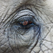 Eye of African Elephant — Stockfoto