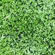 Royalty-Free Stock Photo: Artificial turf background