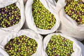 Sacks with Olives — Stock Photo