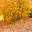 Stock Photo: Fall Forest Trail