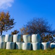 Stock Photo: Haylage bales left outdoors for fermentation.