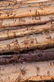 堆积的树的树干背景纹理图案. — 图库照片