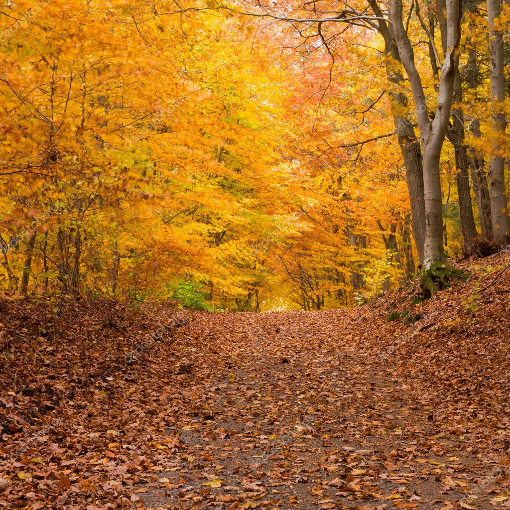 Small trail in golden fall deciduous forest — Stock Photo #6056897