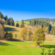 Black Forest Landscape — Foto de stock #6169871