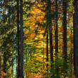 Fall Forest Trail — Stock Photo #6173162