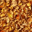 Golden Leaves Background. - 图库照片