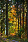 Fall Forest Trail — Stock Photo